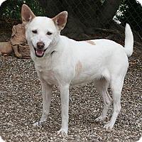 Adopt A Pet :: Bindy - Santa Barbara, CA
