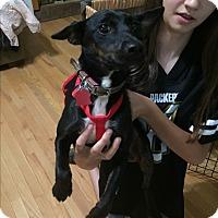 Adopt A Pet :: Black Forest - Acworth, GA