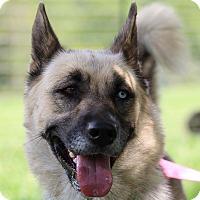 Adopt A Pet :: Brittany - Greeneville, TN