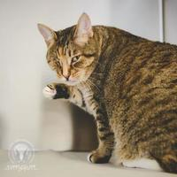 Adopt A Pet :: Bell - Whitby, ON