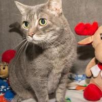 Adopt A Pet :: Lucky - Neenah, WI