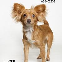 Adopt A Pet :: Humphrey  (Foster Care) - Baton Rouge, LA