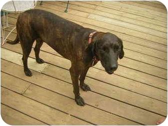 Plott Hound Mix Dog for adoption in Marietta, Georgia - Henry