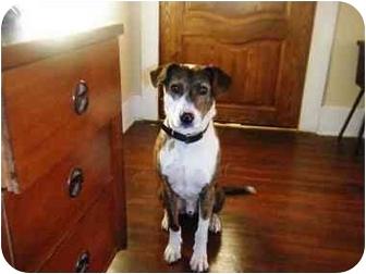 Terrier (Unknown Type, Medium) Mix Dog for adoption in Irvine, California - Tobin