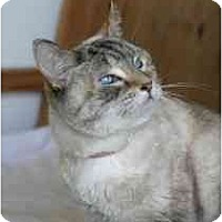 Adopt A Pet :: Thomasina - Marietta, GA