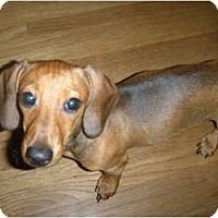 Adopt A Pet :: Daisy and Tazz - Warren, NJ
