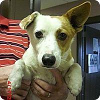 Adopt A Pet :: Homey - Houston, TX