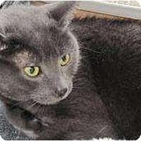 Adopt A Pet :: Scarlet - Warren, MI