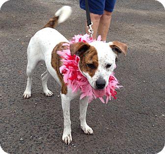 Terrier (Unknown Type, Medium) Mix Dog for adoption in Allentown, Pennsylvania - Star