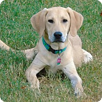 Adopt A Pet :: *Casper - PENDING - Westport, CT