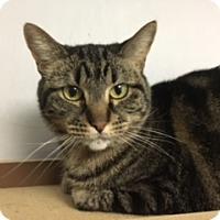Adopt A Pet :: California - Medina, OH