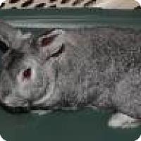 Adopt A Pet :: Papito - Edmonton, AB