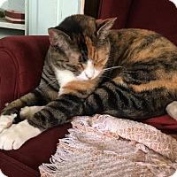 Adopt A Pet :: Cali - Norwich, NY