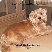 Adopt A Pet :: Zack - Ft Myers, FL