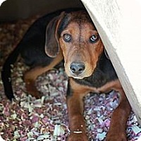 Adopt A Pet :: Abe - Beacon, NY