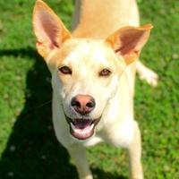 Adopt A Pet :: Harris - Greenwood, SC