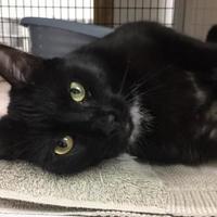 Adopt A Pet :: Sam - Decatur, IL