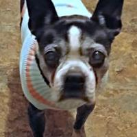 Adopt A Pet :: Available ELLIE - Greensboro, NC