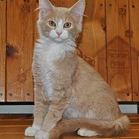 Adopt A Pet :: Lucas - Parsons, KS