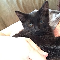 Adopt A Pet :: Pyxel - Tampa, FL