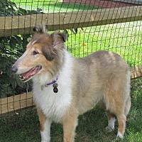Adopt A Pet :: Zeb - Powell, OH