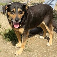 Adopt A Pet :: Homie - Indiana, PA
