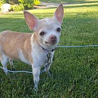 Adopt A Pet :: Chloe - Salt Lake City, UT