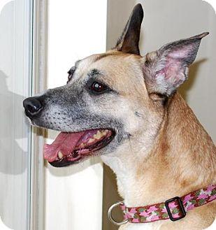 Shepherd (Unknown Type)/Terrier (Unknown Type, Medium) Mix Dog for adoption in Vineland, New Jersey - Lindsey