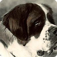 Adopt A Pet :: T2 - TOBY II - Glendale, AZ