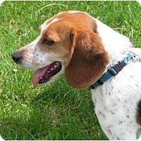 Adopt A Pet :: Lucky - Rigaud, QC