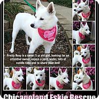 Adopt A Pet :: Roxy - Elmhurst, IL