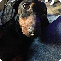 Adopt A Pet :: Sherry - Gainesville, FL