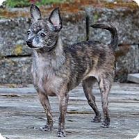 Adopt A Pet :: Tiny Hope - Lynnwood, WA