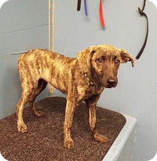 Terrier (Unknown Type, Medium) Mix Puppy for adoption in Chalfont, Pennsylvania - Pumpkin