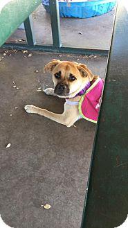 Pug Mix Dog for adoption in Enid, Oklahoma - Nala
