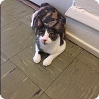Adopt A Pet :: Princessa - Chicago, IL