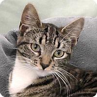 Adopt A Pet :: Dakota - Redondo Beach, CA