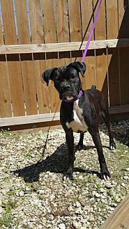 Boxer Dog for adoption in Hankamer, Texas - Black Beauty