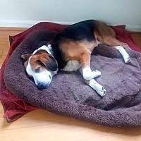 Adopt A Pet :: Skinner: Terrace Park - Cincinnati, OH