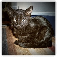 Adopt A Pet :: GALENA - Medford, WI
