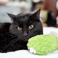 Adopt A Pet :: Figgy - Somerville, MA