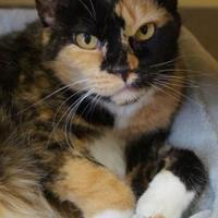 Adopt A Pet :: Babs - Merrill, WI