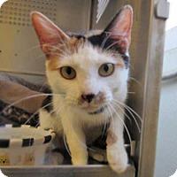Adopt A Pet :: Mona - Rancho Santa Fe, CA