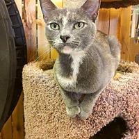 Adopt A Pet :: Mallory - Leonardtown, MD