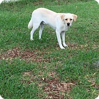 Adopt A Pet :: Calvin - Gainesville, FL