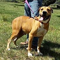 Adopt A Pet :: Barnie - Simsbury, CT