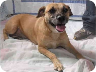 Hound (Unknown Type) Mix Dog for adoption in Honesdale, Pennsylvania - Lil Brandy