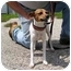 Photo 4 - Jack Russell Terrier/Parson Russell Terrier Mix Dog for adoption in Buffalo, New York - Tinkerbell