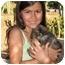 Photo 3 - Shepherd (Unknown Type)/Australian Shepherd Mix Puppy for adoption in Poway, California - Little Rascals
