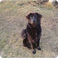 Adopt A Pet :: Fin - New Boston, NH
